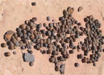 Des sphères usinées il y a 3 milliards d'années